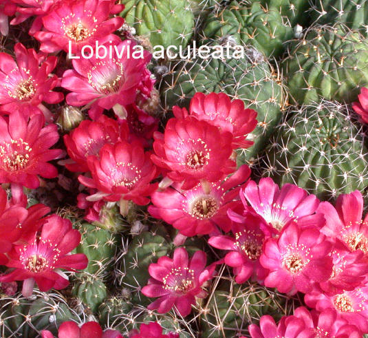 New items small bright red flowers mightylinksfo